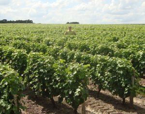 wijnproeverij wijnblog